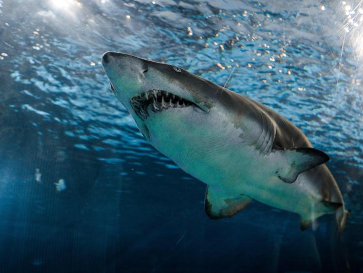 生理中の海のレジャー。経血のにおいにサメは寄ってくる? 専門家の見解は